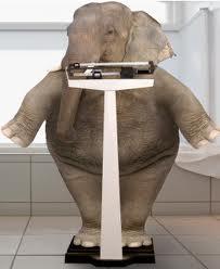 elephant-on-scale